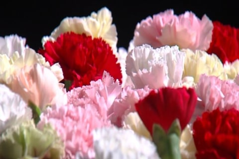 Boy Buys Valentine's Flowers for Every Girl in His High School