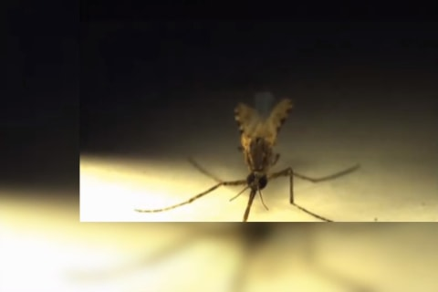 Watch Laser Zap This Mosquito