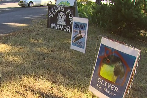 Orca, Parrot, Dogs Vie to Be Small Town's Next Mayor