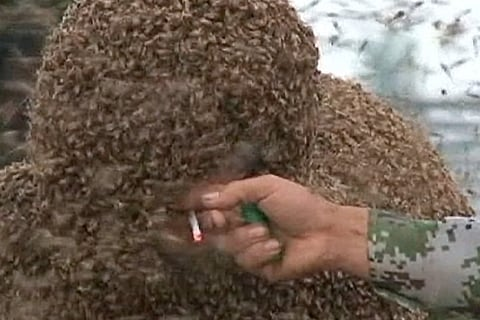 Does He Do It For The Buzz? Bee Man Claims World Record