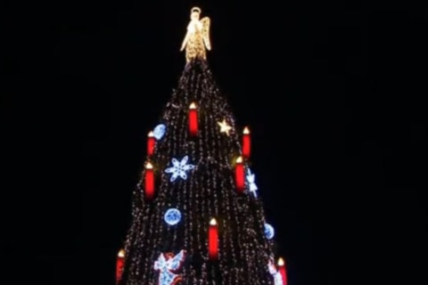 See the World's Largest Christmas Tree
