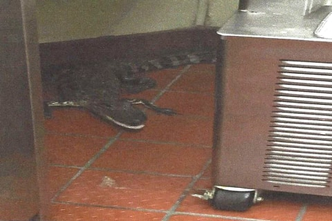 Florida Man Faces Assault Charges After Alligator 'Prank'