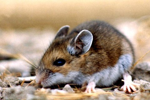 Honda's Soy-Based Wiring Covers Irresistible to Rodents: Lawsuit