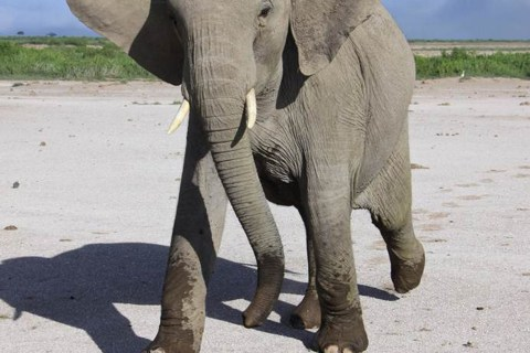 Why Elephants Don't Get Cancer