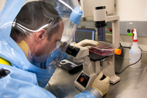 ZMapp Saves Sick Monkeys From Ebola, Study Finds
