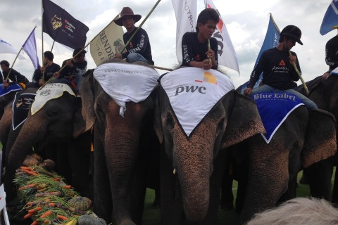 Thai Elephant Polo Tournament Aims to Help Beleaguered Pachyderms