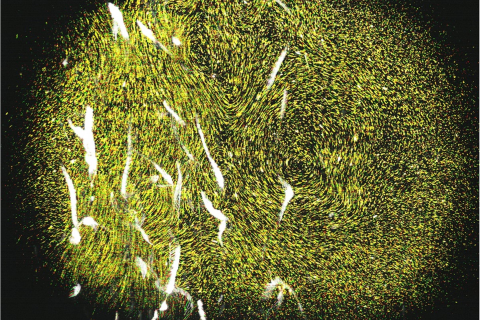 Laser-Guided Sea-Monkeys Reveal How Critters Boost Ocean's Waves