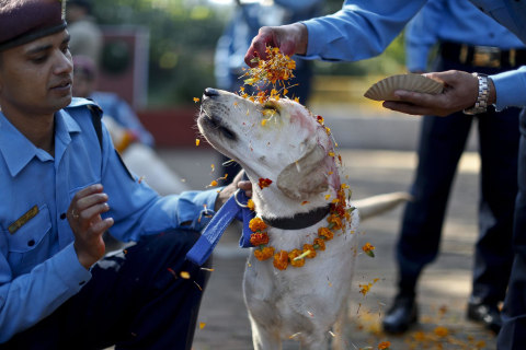 Feel the Love: Dogs Join Diwali Celebration