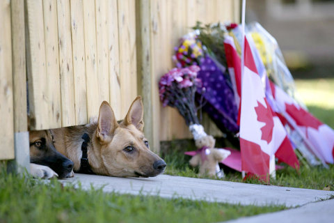 Forever Faithful: Slain Soldier's Dogs Wait For Master's Return