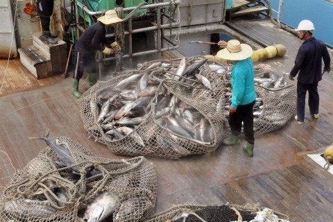 Botched IPO by Chinese Tuna Company Has Fishy Outcome
