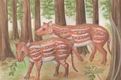 What Horses and Rhinos Have in Common: An Ancestor in India