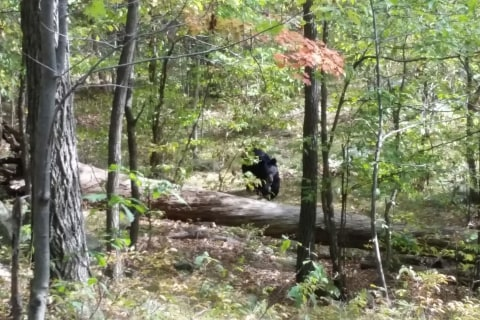 Hiker Took Photo of Bear Before It Killed Him