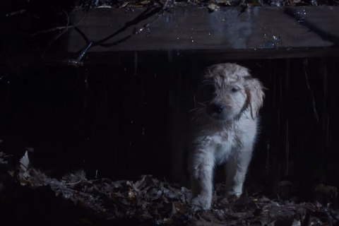 GoDaddy's Big Game Ad Pokes Fun at all the Puppies