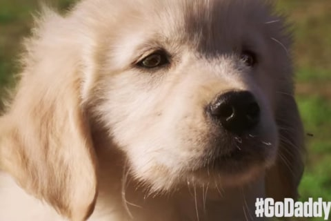GoDaddy Pulls 'Lost Puppy' Super Bowl Ad After Backlash