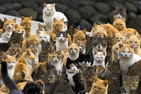 'Cat Island': Felines Outnumber Humans on Japan's Aoshima Island