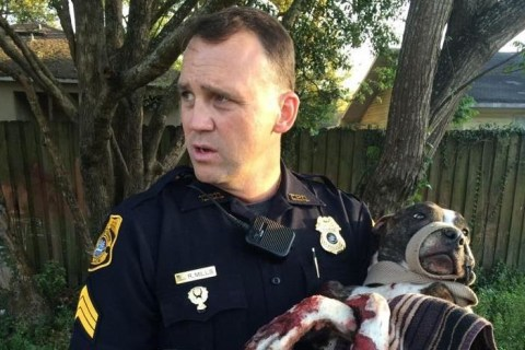 Dog Rescued After Being Shot, Tied to Railroad Tracks