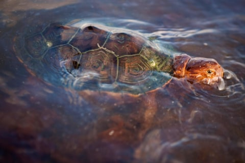 Wildlife Struggling Five Years After BP Oil Spill: Report