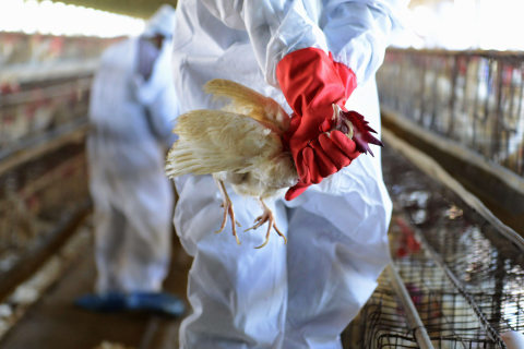 Watch Out for Bird Flu, WHO Says