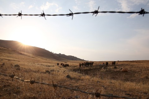 California OKs Offer of Voluntary Water Cuts by Farmers