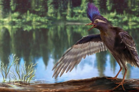 Oldest Known Bird Ancestor? That Depends on Your Definition