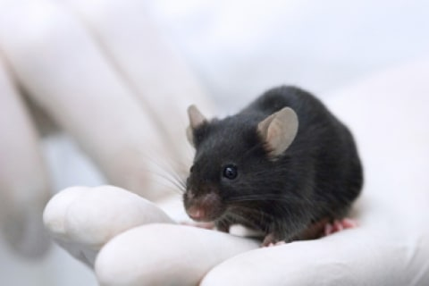 Astro-Mouse Study Suggests Spaceflight Could Be Bad for Your Skin