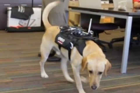 'Smart Harness' Makes It Easier for Dogs and Humans to Communicate
