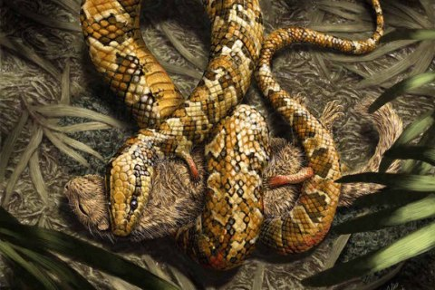 Ancient Snake Ancestor Gripped Prey With Four Feet