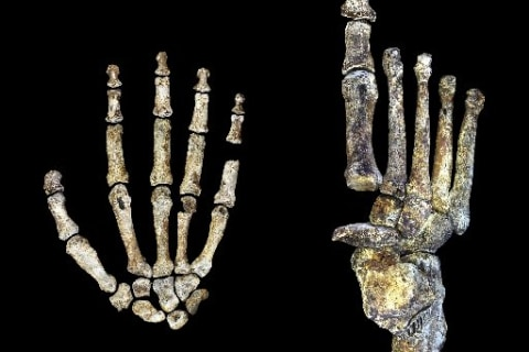Newly Identified Human Ancestor Homo Naledi Was Handy With Tools