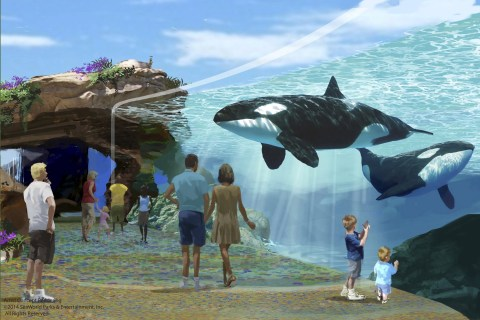 California Commission Approves SeaWorld Whale Tanks, Bans Breeding