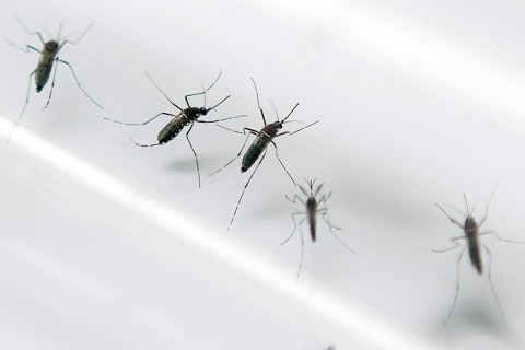 Zika Virus: Five Things You Need to Know