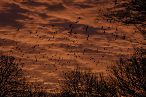 Saturday in Pictures: A Clamor of Rooks and More