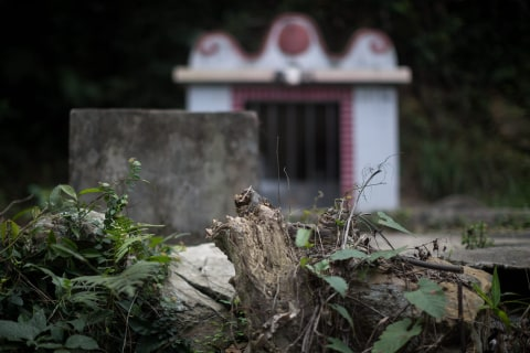The Trees That Gave Hong Kong Its Name Near Extinction
