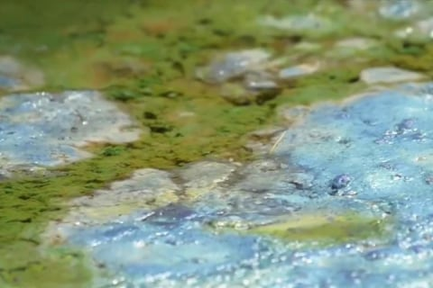 State of Emergency Declared Over Algae Blooms in Florida