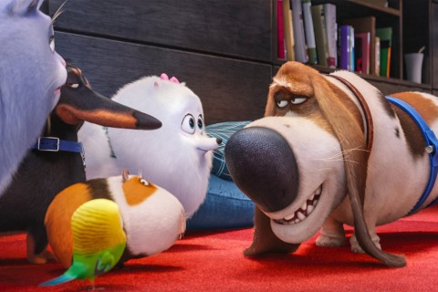 'The Secret Life of Pets' Fetches $103 Million in Opening Days