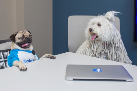 'Pawer' Lunch? Zuckerberg's Dog Meets Viral Star Doug the Pug at Facebook HQ