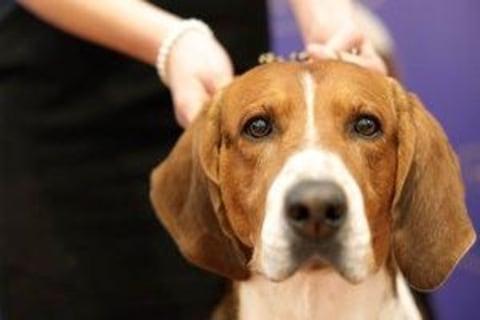 Skin Cancer Cream Killed Dogs, FDA Says