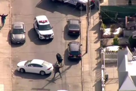 Bull Dies Hours After Leading Police on Chase in New York