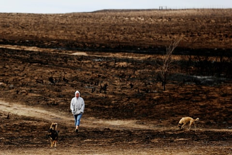 Ranchers Survey Painful Losses After Deadly Wildfires