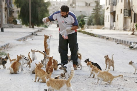 'Cat Man of Aleppo' Forced to Start Again — From Scratch