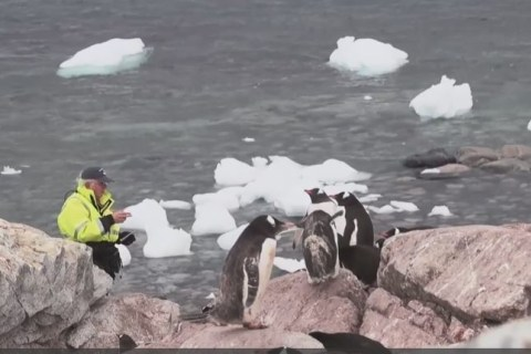What Penguins in Antarctica Might Be Telling Us About Climate Change