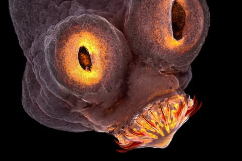 Nikon Small World Contest Reveals Unseen Microscopic World All Around Us