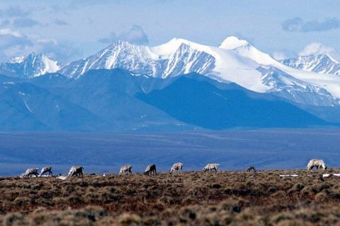 GOP Lawmakers Open Door to Arctic Drilling