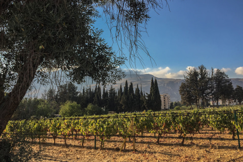 Lebanon's Wine Industry Is Ripe With History