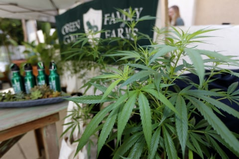 California issues first licenses for its legal pot market