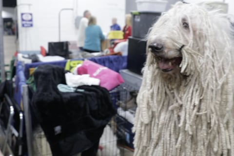 Video: Go behind the scenes at the National Dog Show
