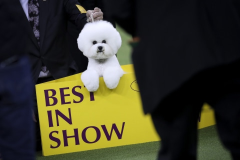 Top dogs crowned at Westminster dog show