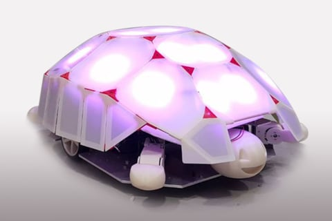 This tiny tortoise has a big lesson to teach kids about robots
