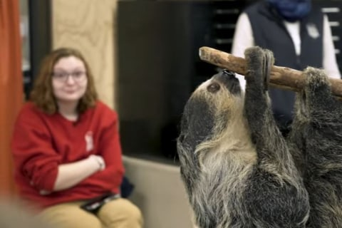 Sloth art class: The public school inside a zoo