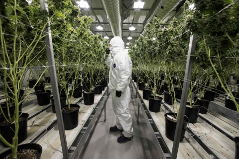 Canada's Senate passes marijuana bill but legalization delayed