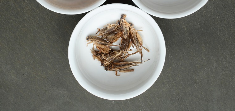How Crickets Could Help Save the Planet